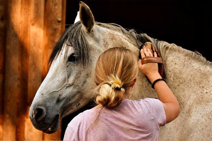 peinando caballo